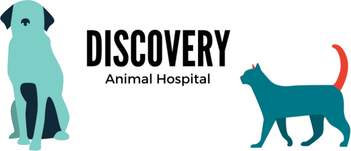 Discovery Animal Hospital